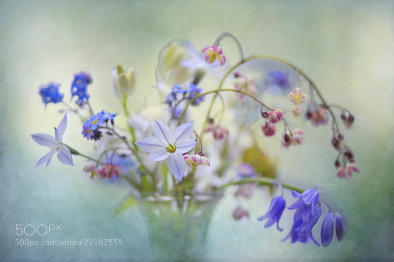 Photograph Spring Dream by Jacky Parker on 500px