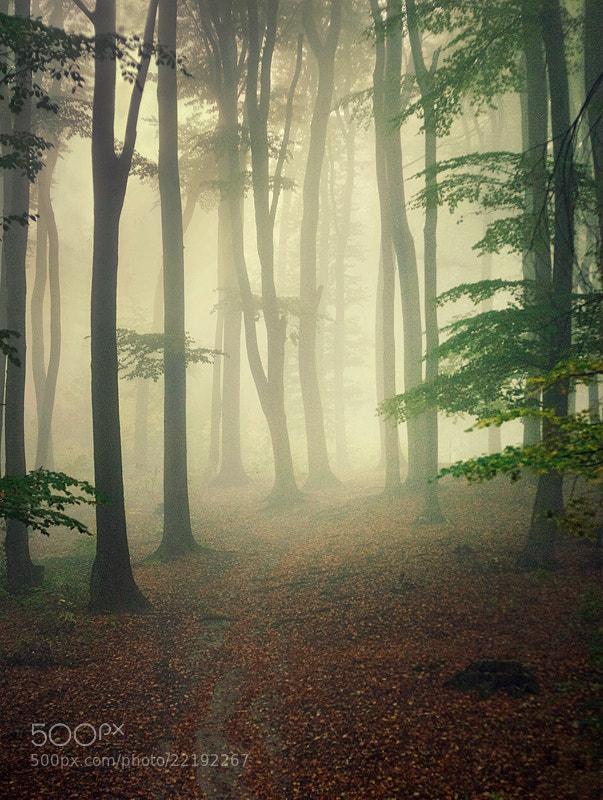 Photograph Misty by Piotr Szewczyk on 500px