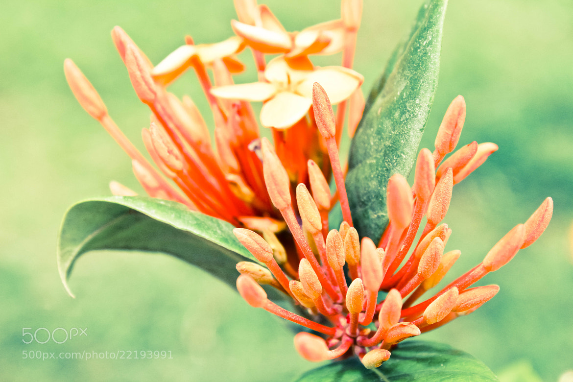 Photograph Flower by MH Photographx on 500px