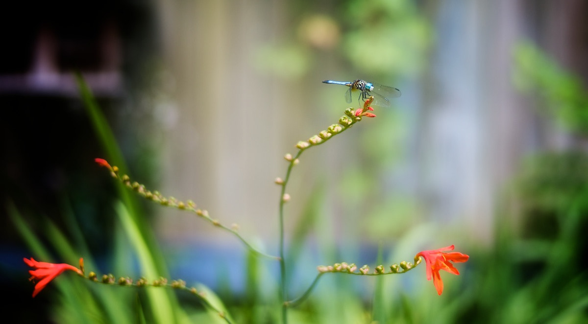 Photograph Life of a dragonfly by Susan Dennis on 500px