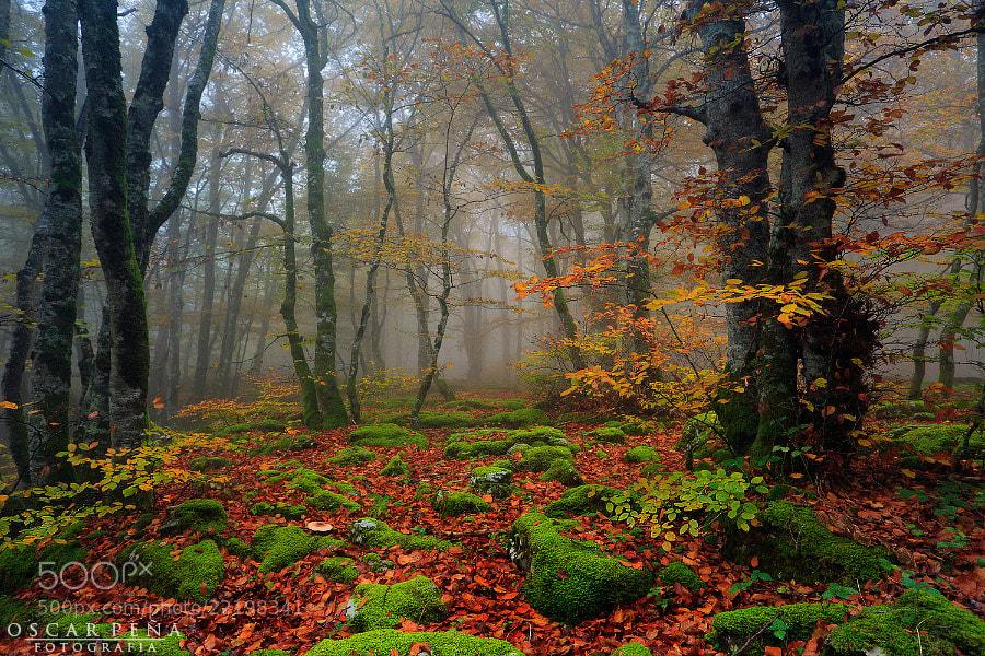 Photograph - Colores del bosque - by Oscar  Peña on 500px
