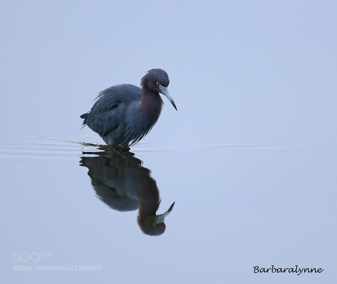 Photograph Mirror, Mirror on the water... by Barb D'Arpino on 500px