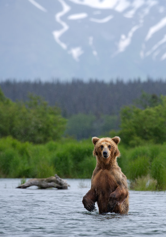 Photograph Brown Bear by Mirek Zítek on 500px