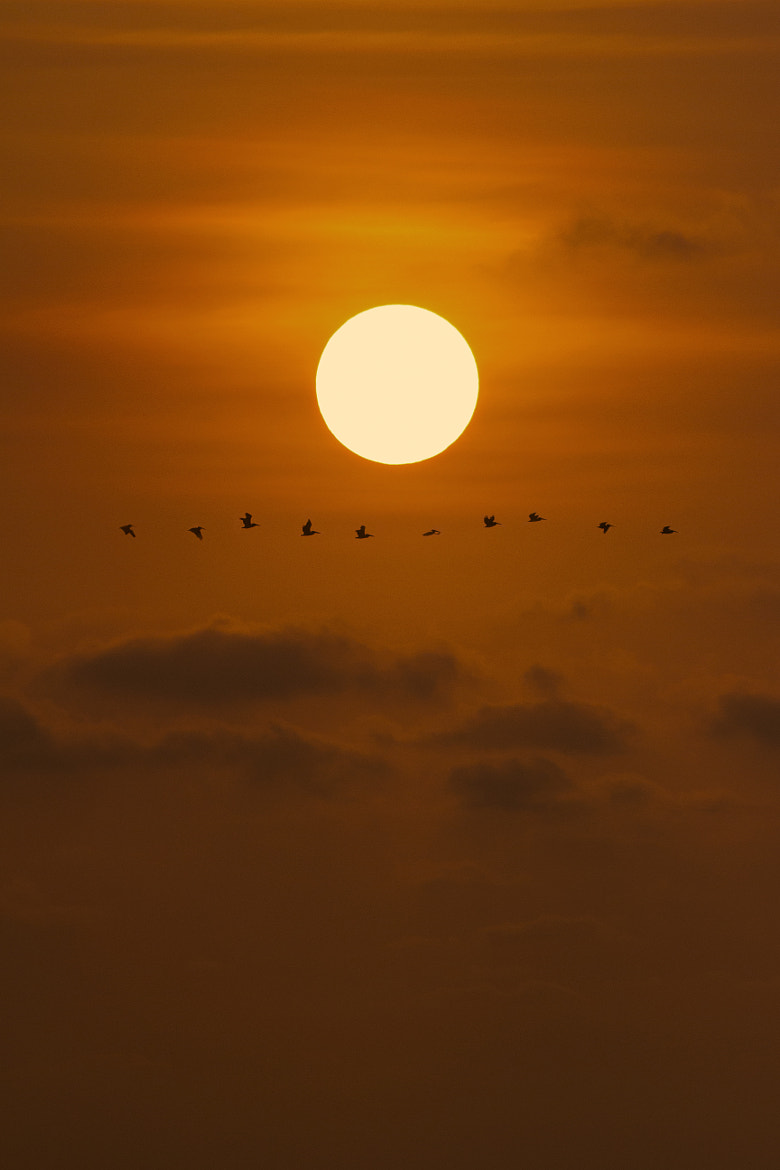 Photograph Sunset & birds by Bernardo Dominguez on 500px