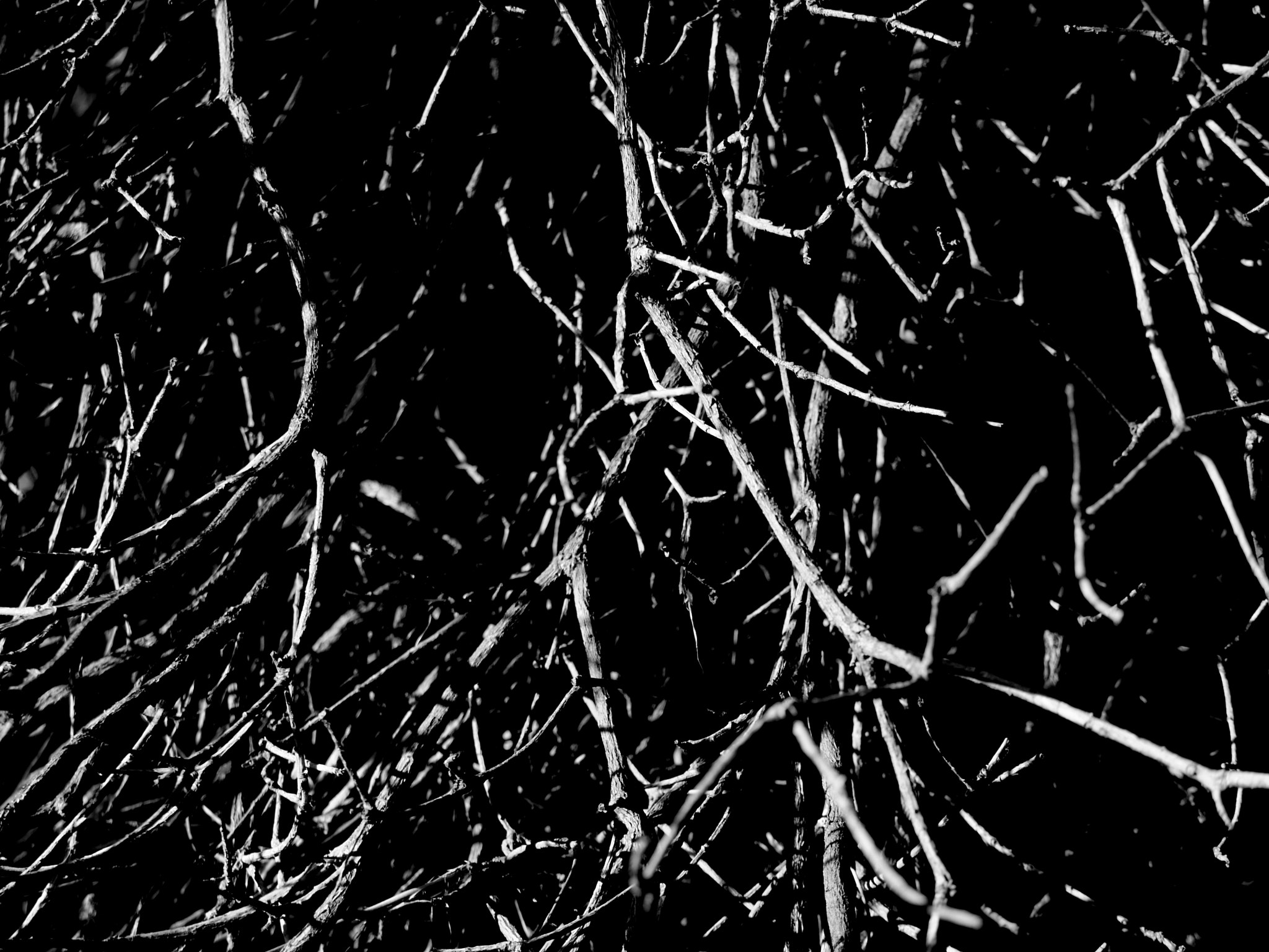 Photograph Twisted branches by Federichina Stregatto on 500px