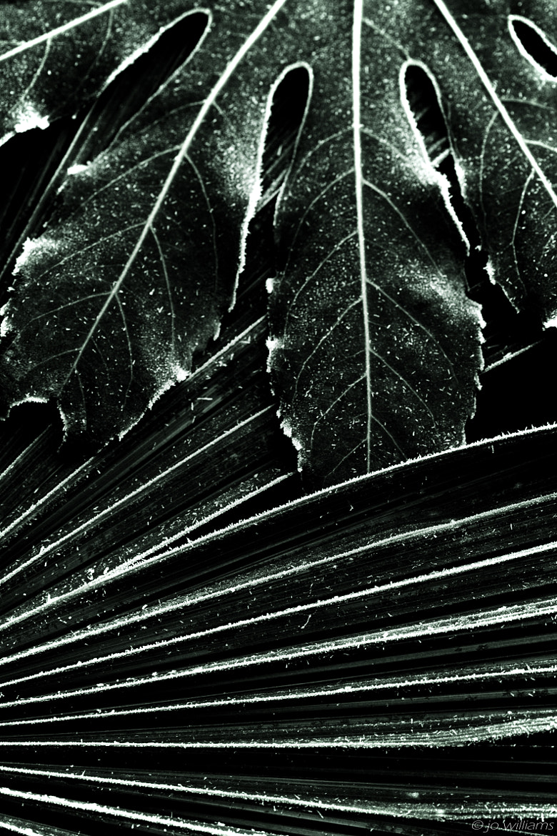 Photograph LEAF LIKE by jo williams on 500px