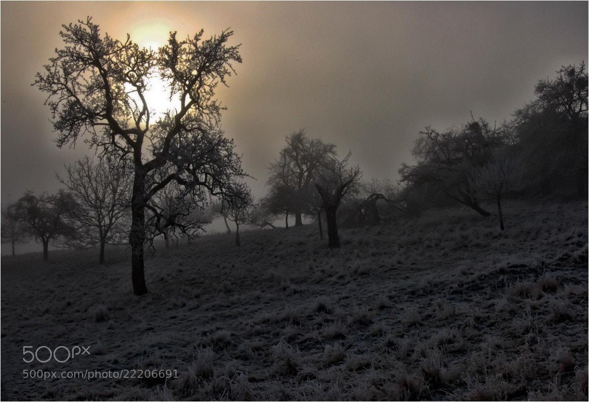 Photograph fog and sun by Ulrich Fleischer on 500px