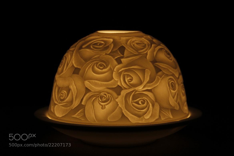 Photograph Warm roses by Greta Dierckx on 500px