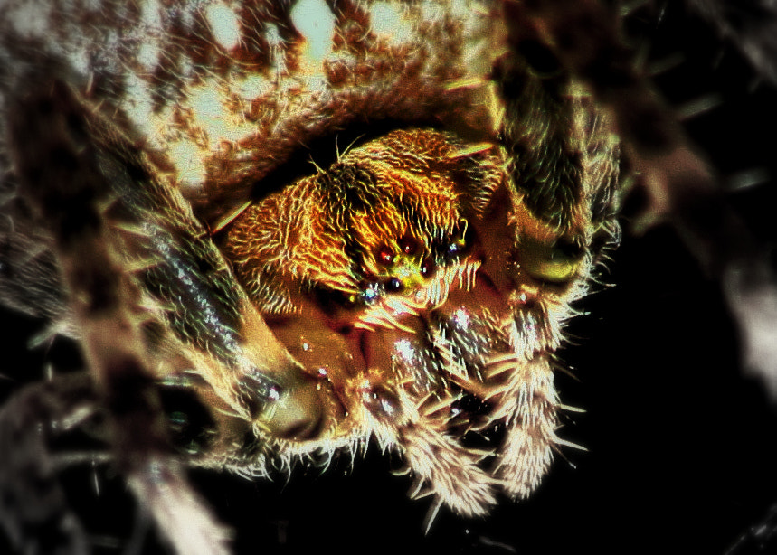 Photograph spider by florian Poirier on 500px