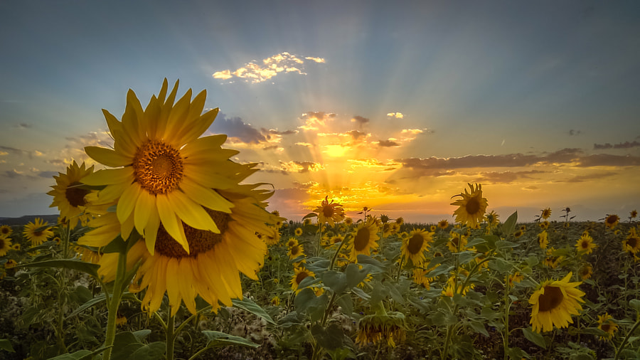 Sunfields-Garden de Ralf Thomas sur500px.com