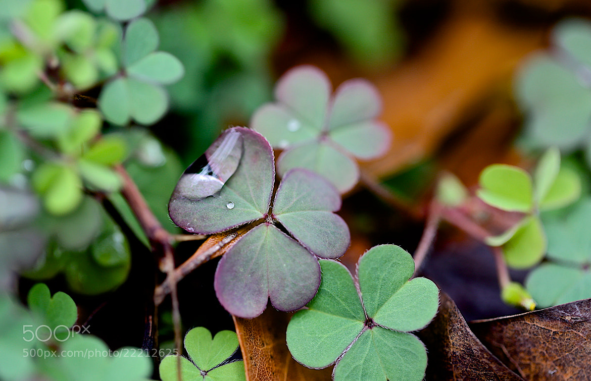 Photograph Little Clover Puddle by James Groce on 500px