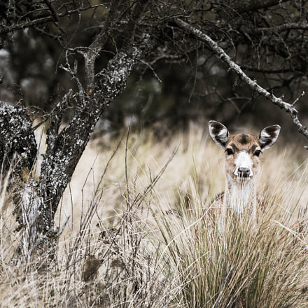 Deer playing hide and seek