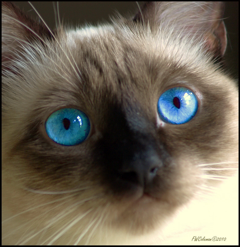 Photograph Blue by Fred Coleman on 500px