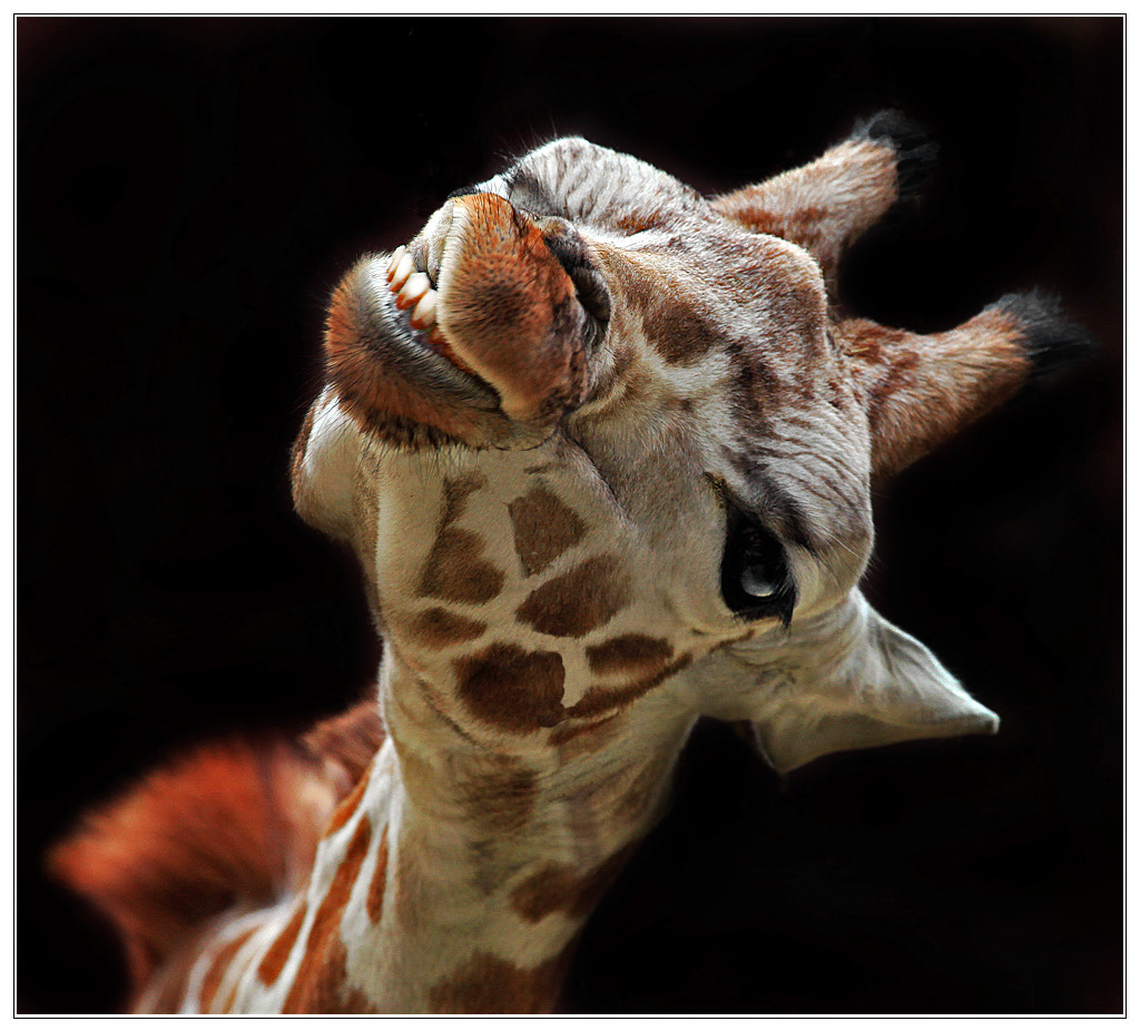 Photograph Friendly by Klaus Wiese on 500px