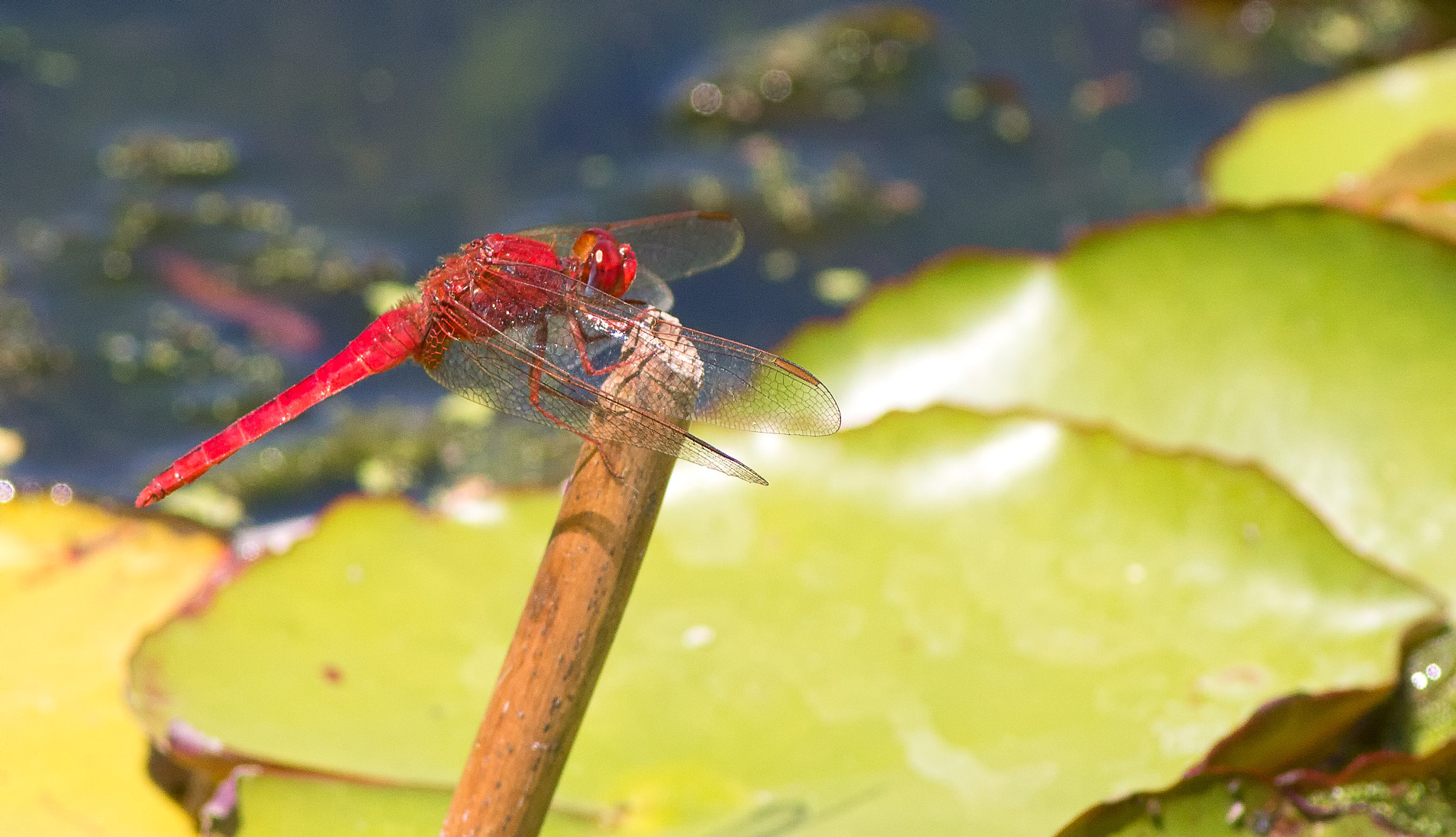 Photograph dragonfly by Nadia Brooks on 500px