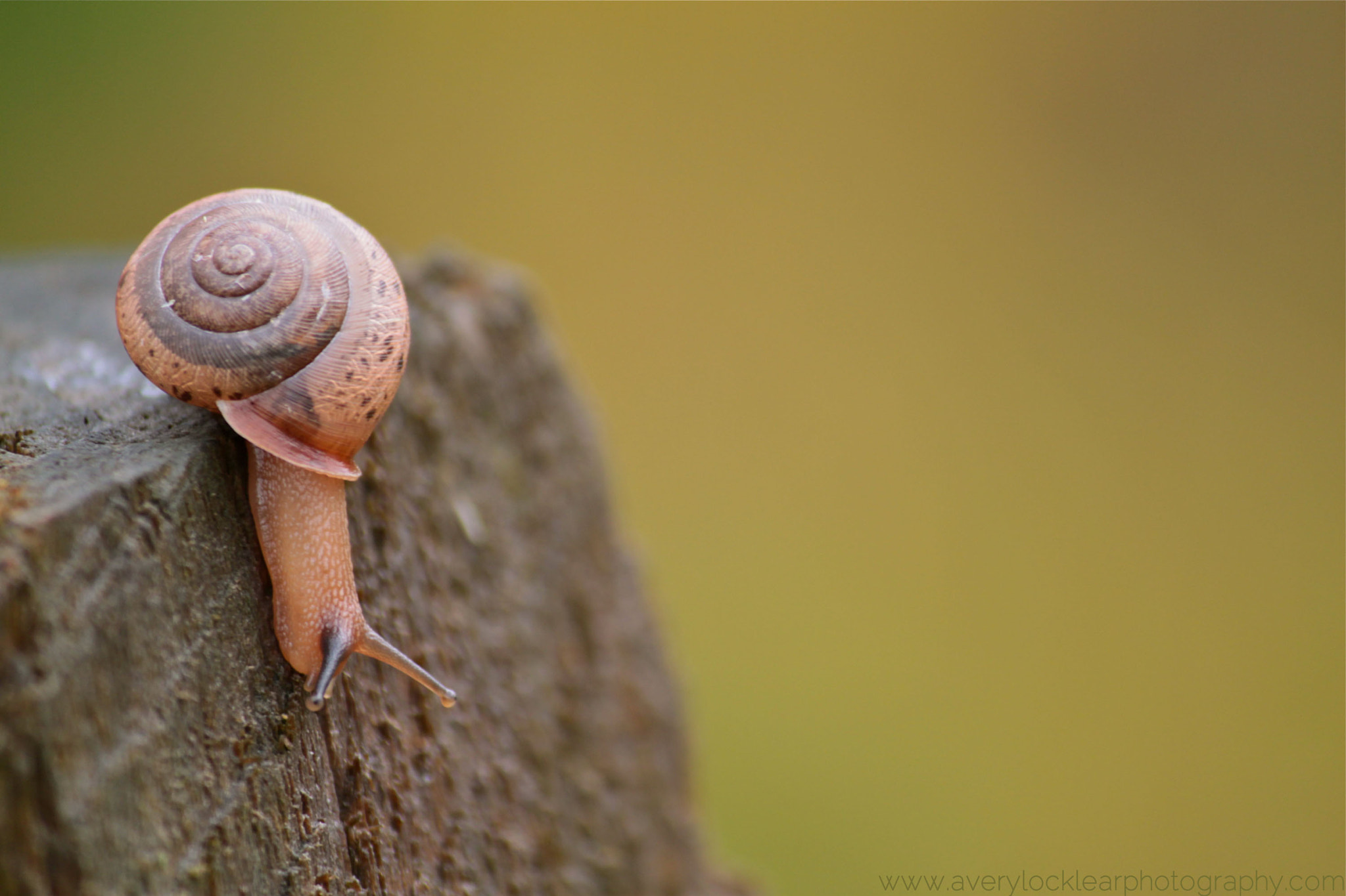 Photograph Snail by Avery Locklear on 500px