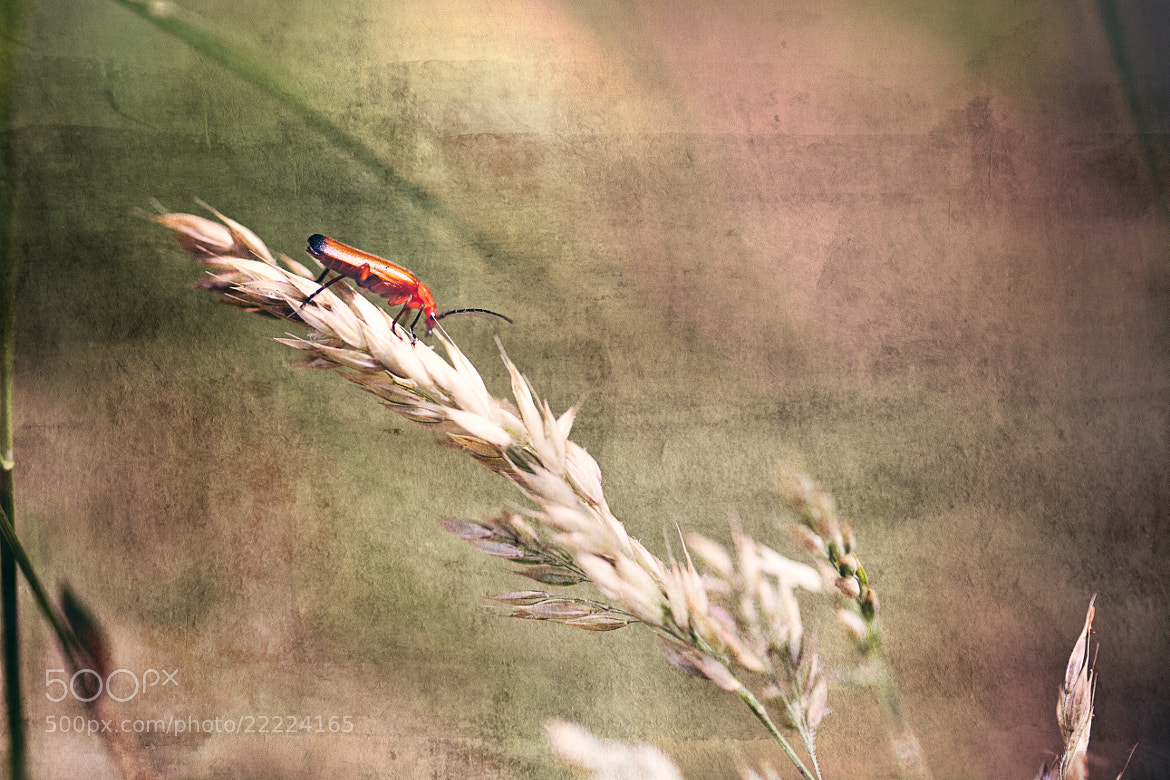 Photograph Red Bug by Andrew Johns on 500px