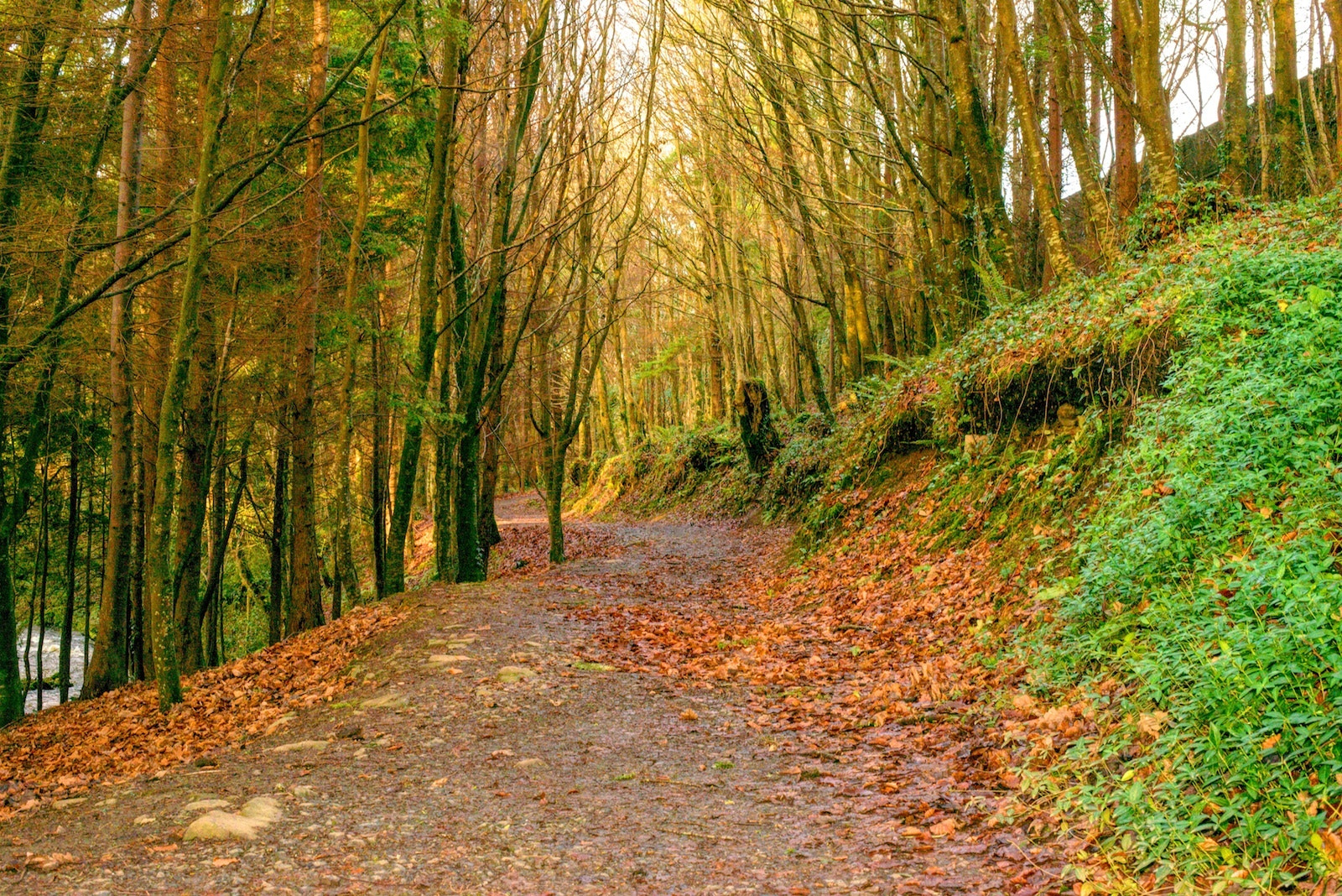 Photograph End of Autumn, Ireland by Mosin  on 500px