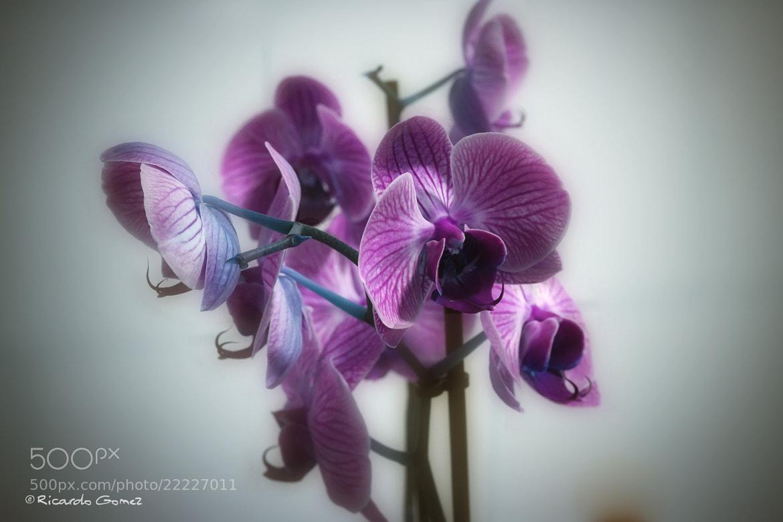 Photograph Orquidea by Ricardo GoMєz on 500px