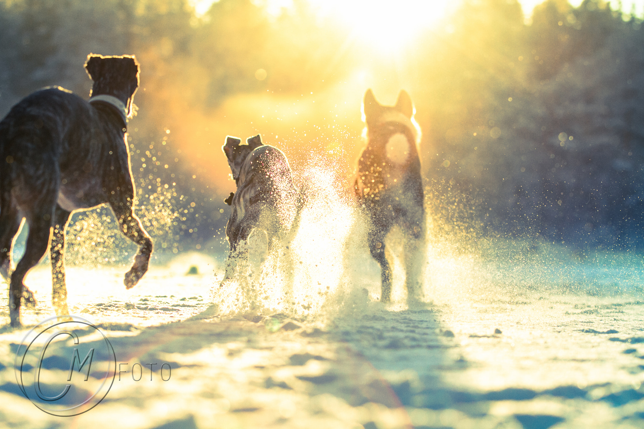 Photograph dogs playing in the winter sun by Cilje Moe on 500px