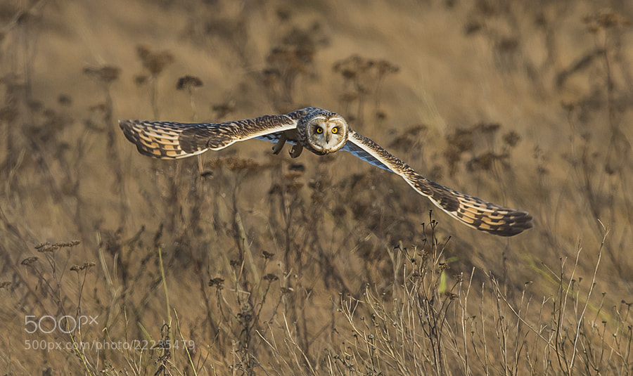 Photograph Flying Low by Dan Newcomb on 500px