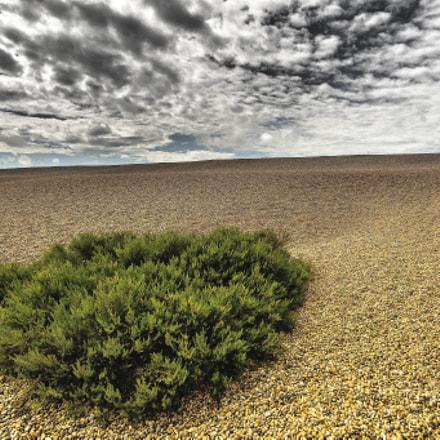 Weymouth moss
