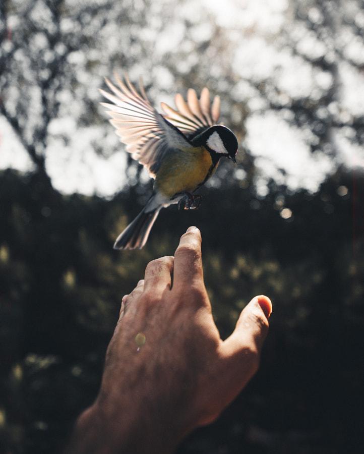 Bird, автор — Nacho Zàitsev на 500px.com