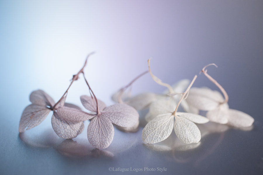 "Floral nature photo ""Danza festiva"" by nature photographer  Lafugue Logos on 500px.com"