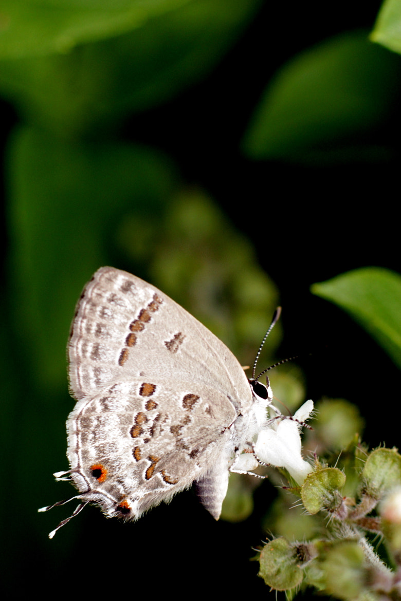 Photograph Some very small butterfly by Jaime C on 500px