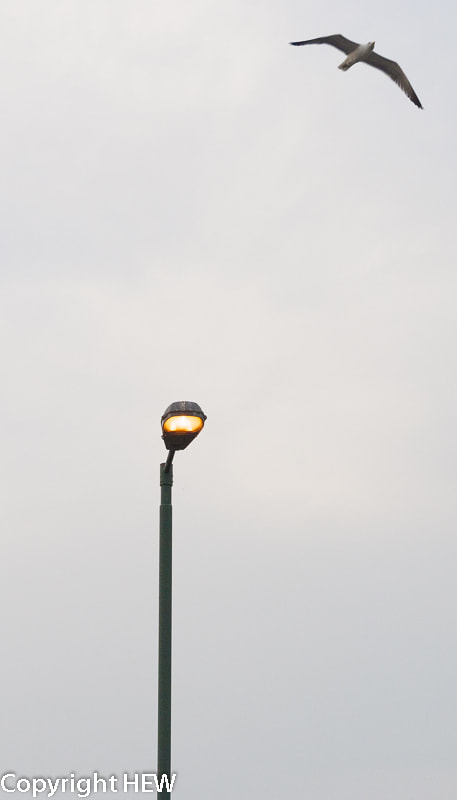 Photograph Bird flying away from lamp post by hew nikon on 500px