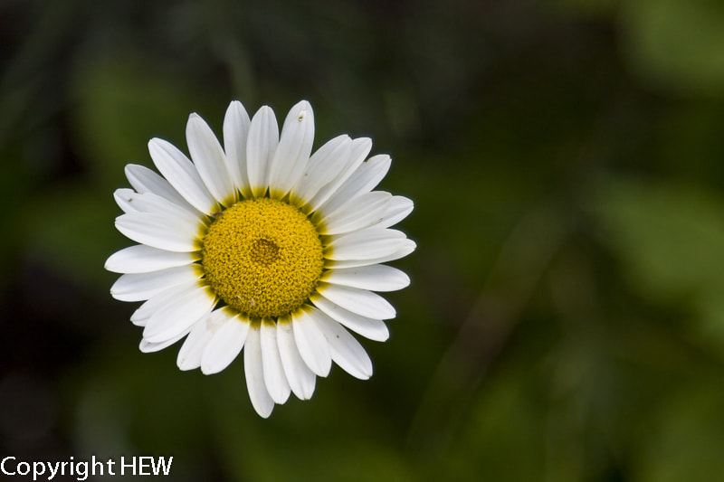 Photograph White Flower by hew nikon on 500px