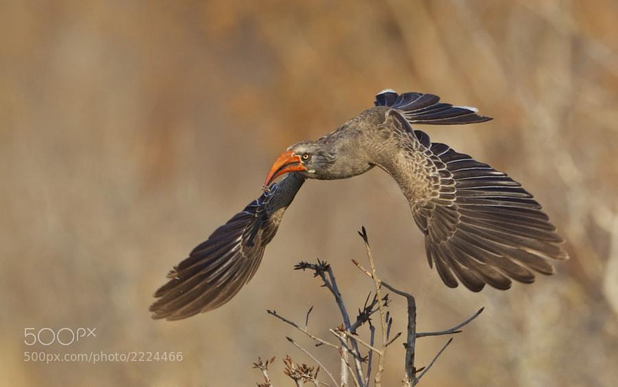 Taken in Hwange National Park, Zimbabwe 5th September 2011