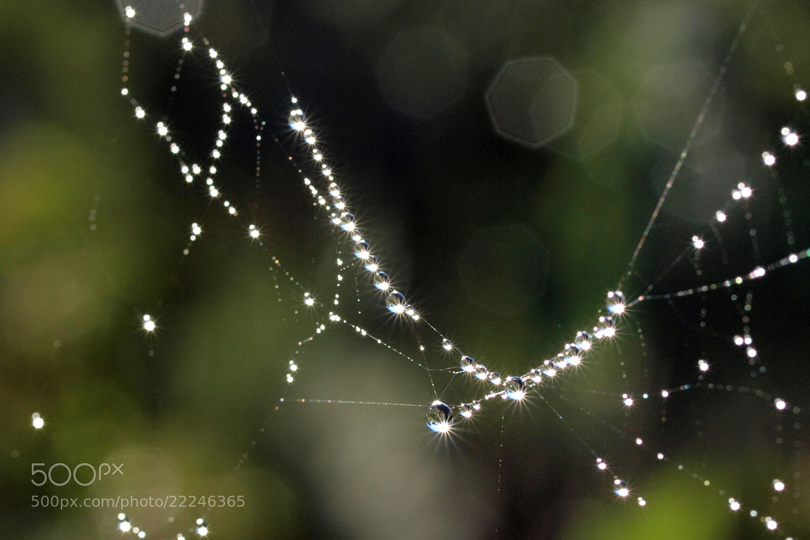 Photograph Diamonds on the Web by John Sharp on 500px