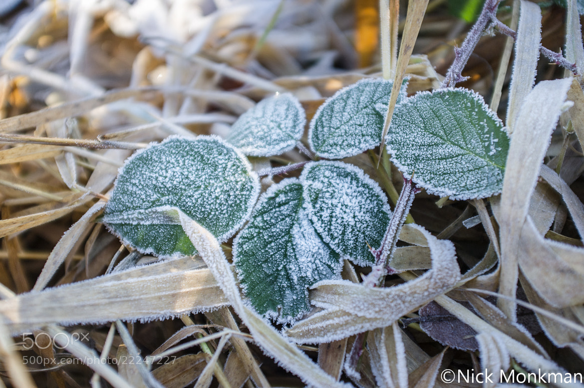 Photograph Frost behind Jersey Mike's I by Nick Monkman on 500px