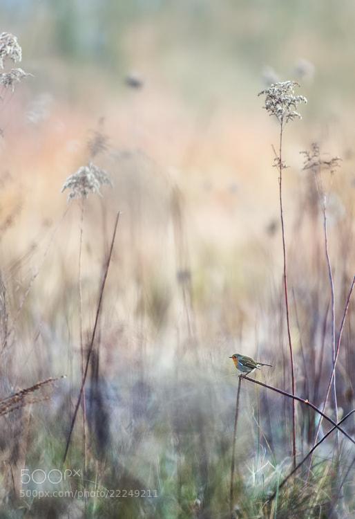 Photograph Far, far away by Stéphane ABCDEF on 500px