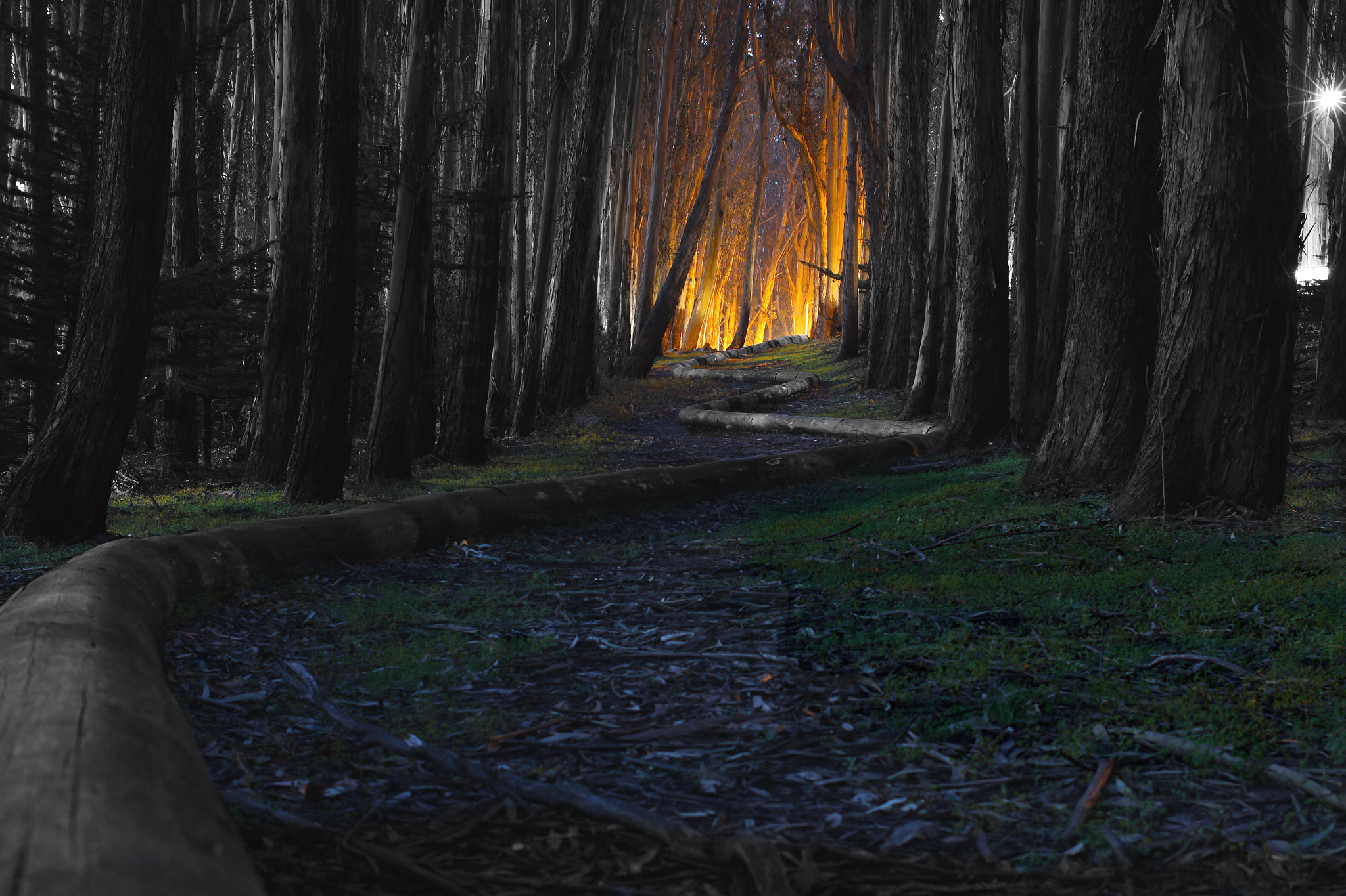 Photograph Haunted Andrew Goldsworthy Forest by Cam Fortin on 500px