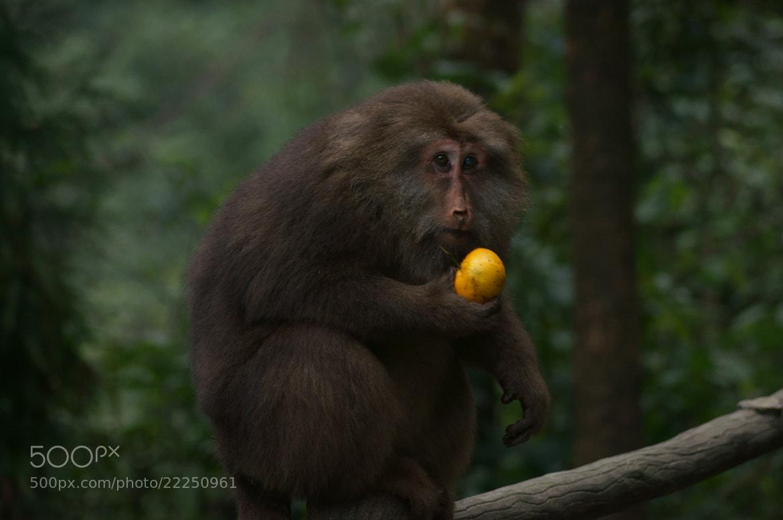Photograph Monkey in Mount Emei by JunLe Li on 500px