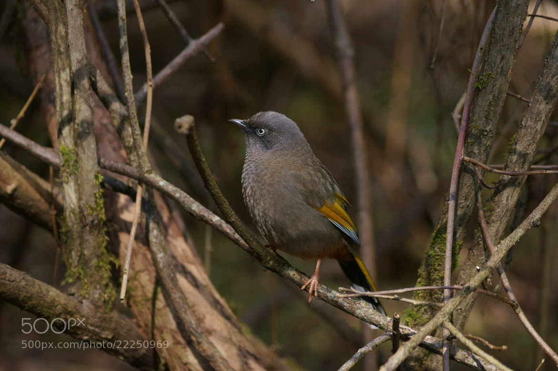 Photograph Bird in Jiuzhaigou Valley by JunLe Li on 500px