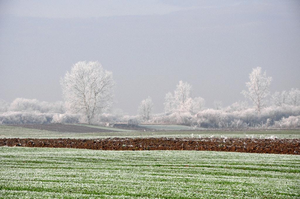 Photograph Winter morning by Mato Bičvić on 500px
