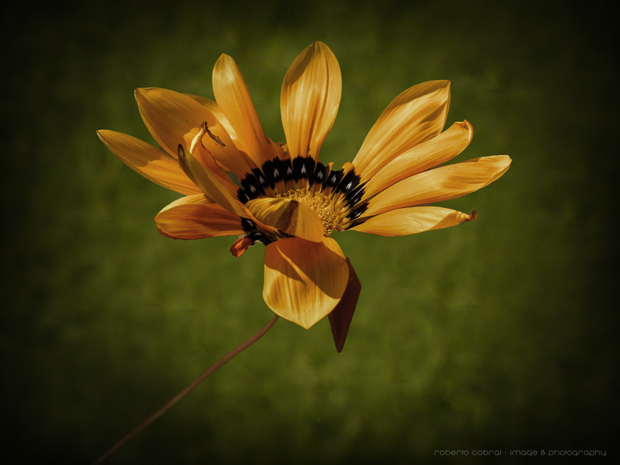 Much more than a flower de Roberto Cabral │Image & Photography en 500px.com