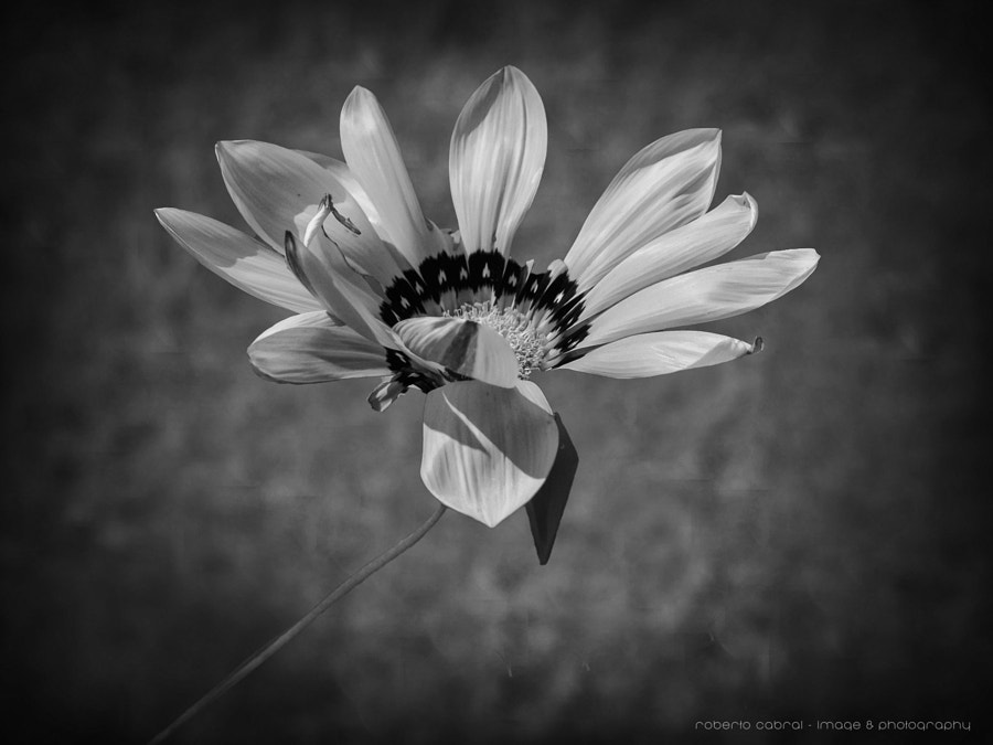 Much more than a flower B&W de Roberto Cabral │Image & Photography en 500px.com