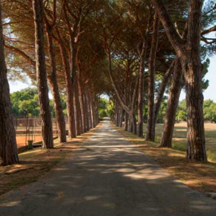 Pine alley