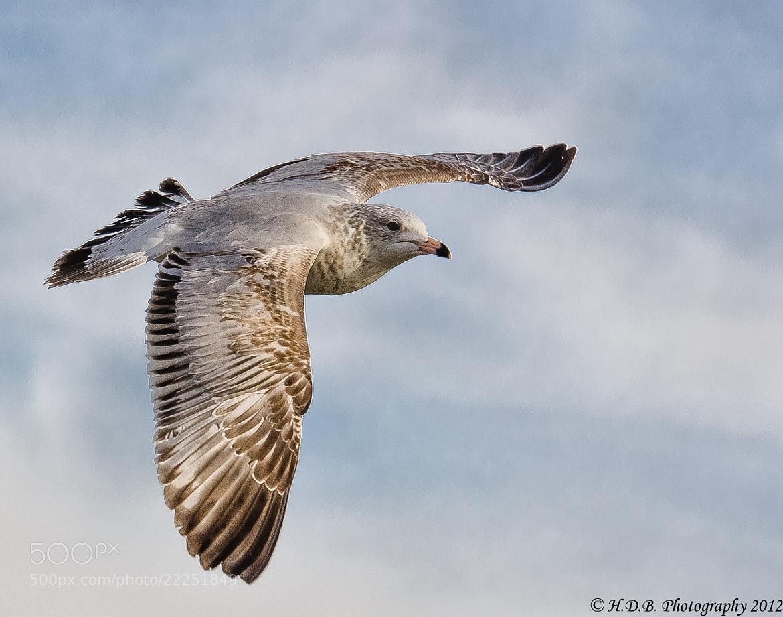 Photograph Flight by Harold Begun on 500px