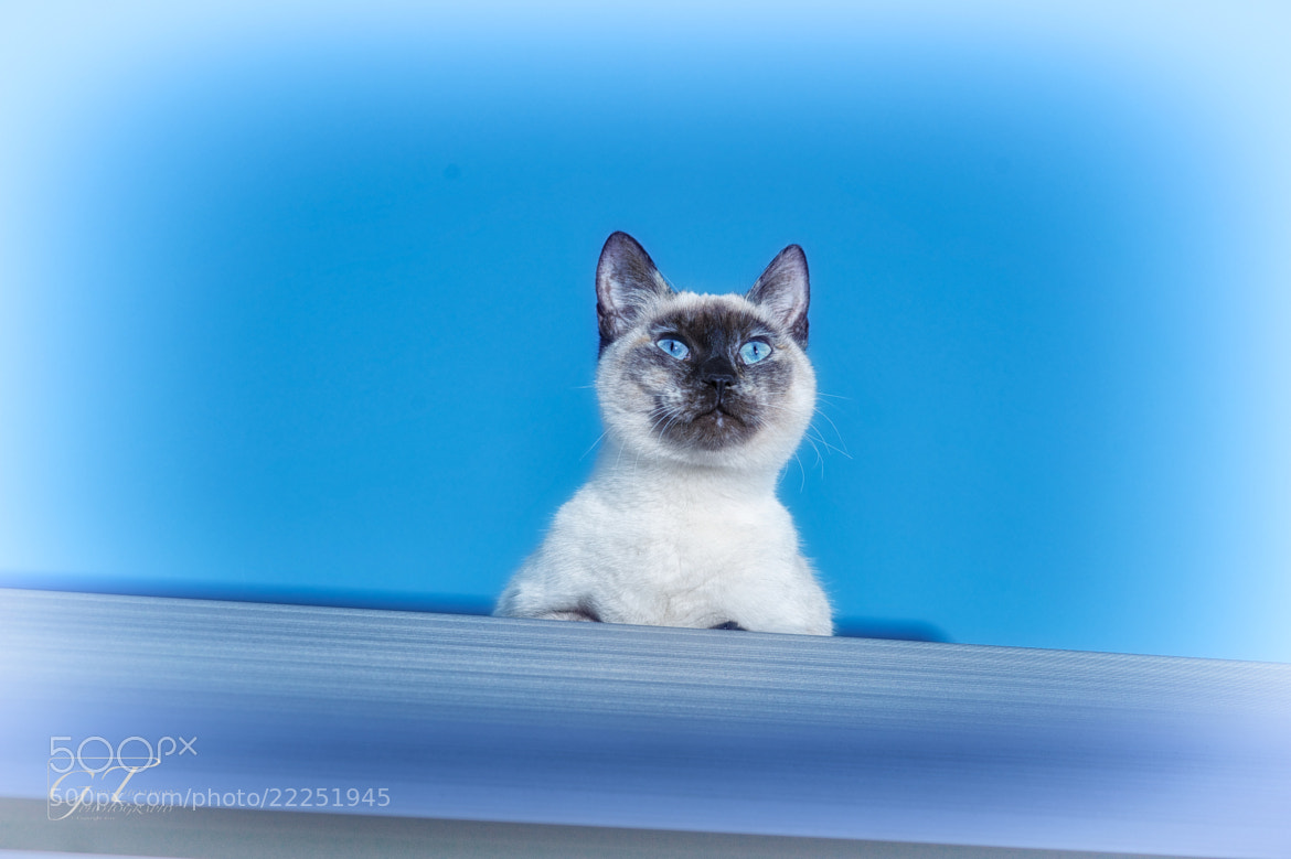 Photograph Look out by Gary Thomson  Photography on 500px