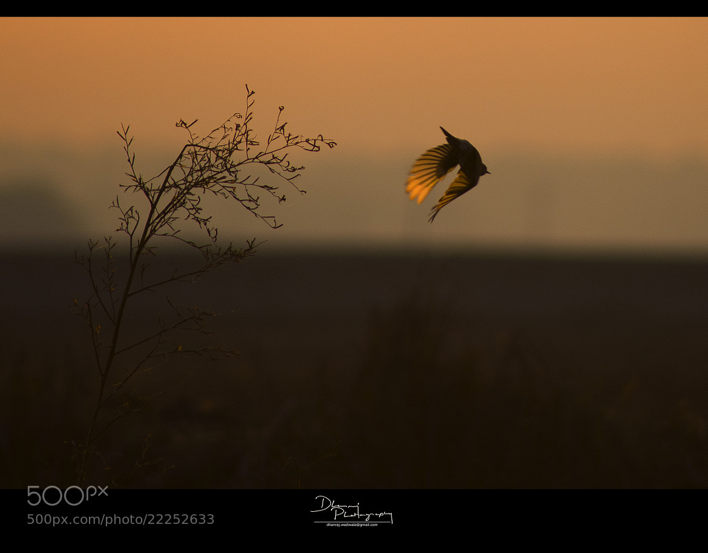 Photograph First flight by Dhanraj Wadiwala on 500px
