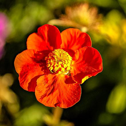 *** anemone ***