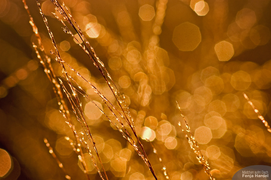 Photograph Natural fairy lights. by Mädchen auf'm Dach on 500px