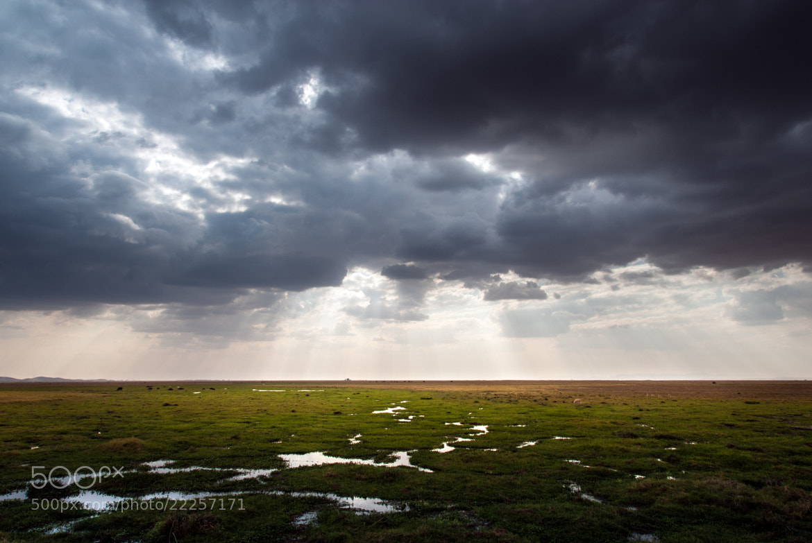 Photograph Swamp by Damien Bapst on 500px