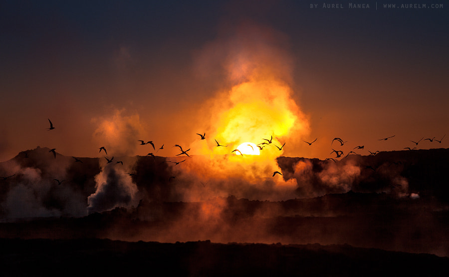 Photograph A spectacle of life by Aurel Manea on 500px