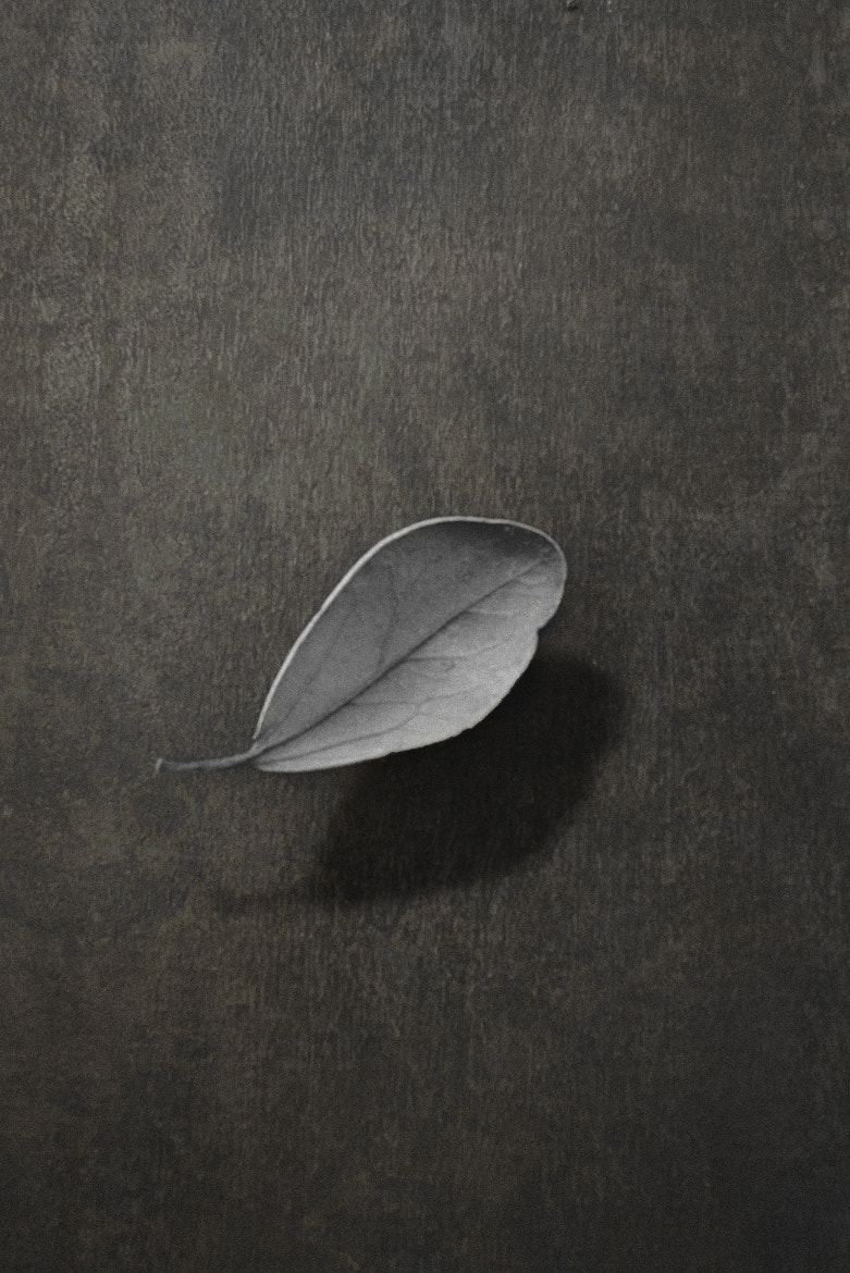 Photograph Leaf  by Jon Westra on 500px